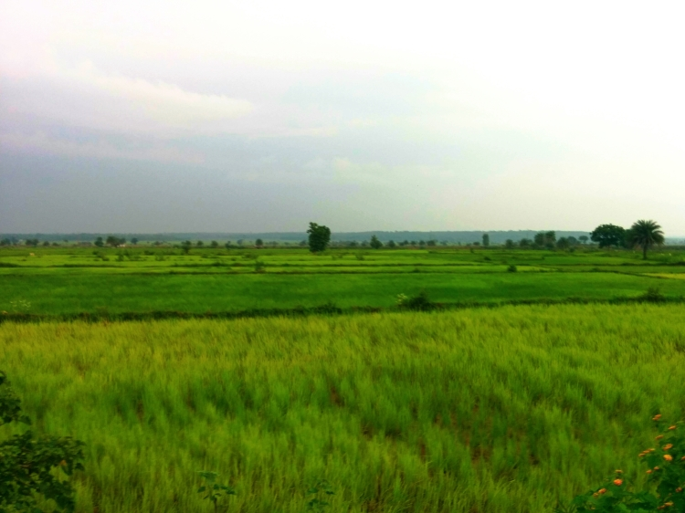 The lush, verdant landscape of Chhattisgarh, so beautiful that it makes you breathe deeper!